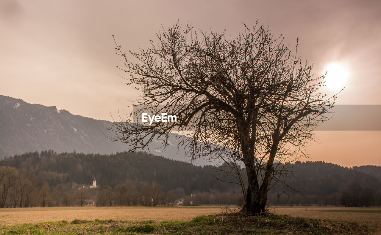 landscape, tree, tranquility, beauty in nature, bare tree, tranquil scene, lone, nature, scenics, remote, sunset, outdoors, branch, no people, sky, day