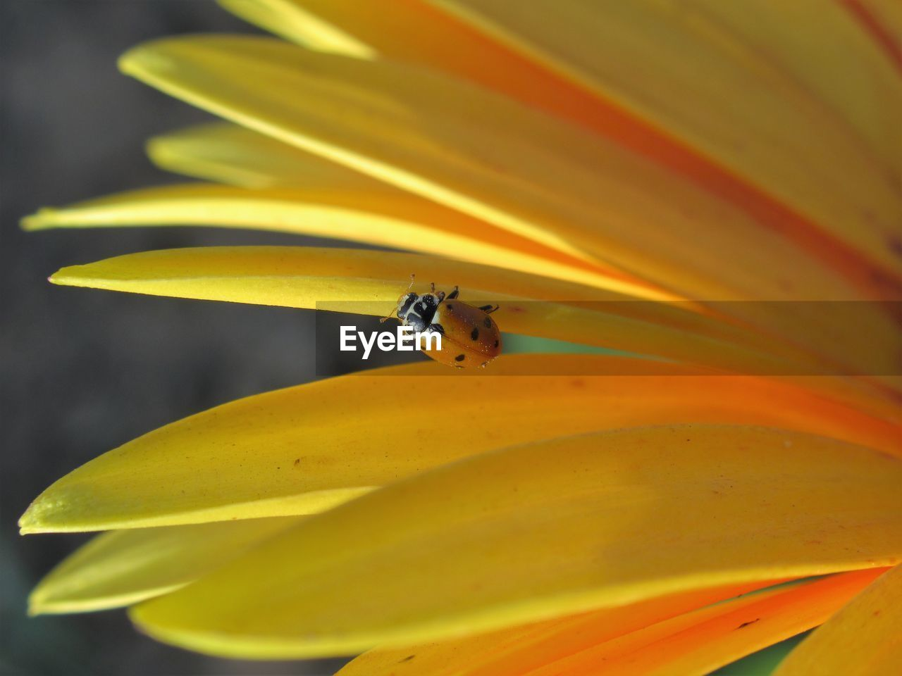 yellow, flowering plant, flower, beauty in nature, fragility, petal, insect, vulnerability, invertebrate, flower head, close-up, one animal, plant, freshness, animal themes, pollen, growth, animal, inflorescence, animal wildlife, no people, outdoors, pollination