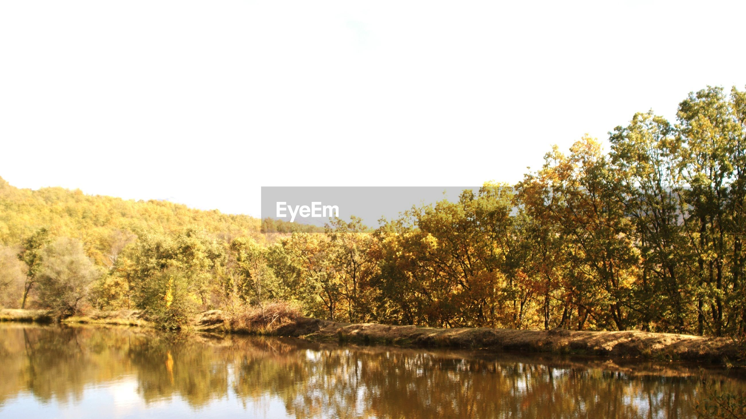 tree, reflection, water, lake, waterfront, clear sky, tranquility, tranquil scene, scenics, beauty in nature, nature, standing water, idyllic, copy space, calm, growth, river, day, forest, non-urban scene