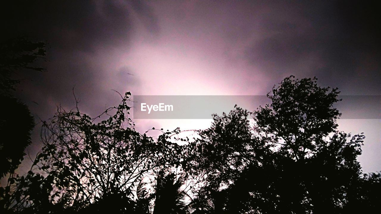 tree, low angle view, sky, nature, beauty in nature, silhouette, no people, growth, scenics, outdoors, tranquility, night, branch, lightning