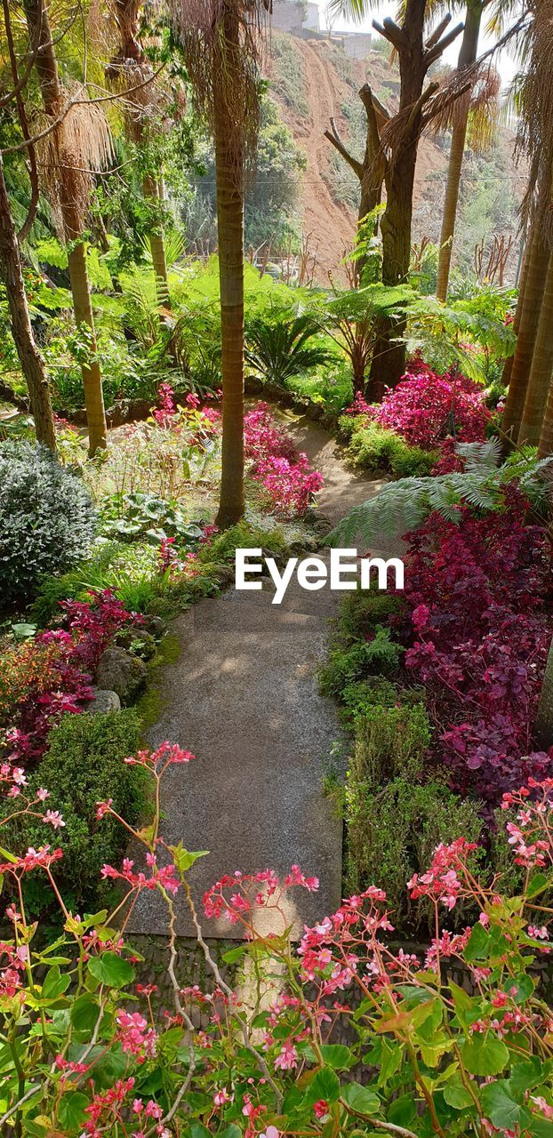 plant, flower, flowering plant, beauty in nature, growth, nature, tree, no people, tranquility, day, tranquil scene, garden, scenics - nature, footpath, park, pink color, formal garden, park - man made space, outdoors, freshness, flowerbed, garden path