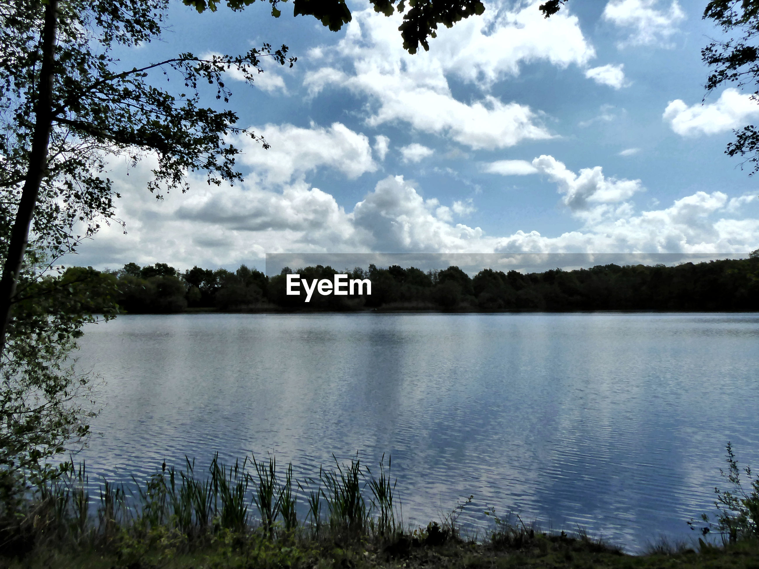 water, lake, tree, plant, sky, cloud - sky, tranquil scene, tranquility, beauty in nature, scenics - nature, nature, day, no people, non-urban scene, reflection, forest, outdoors, lakeshore, landscape