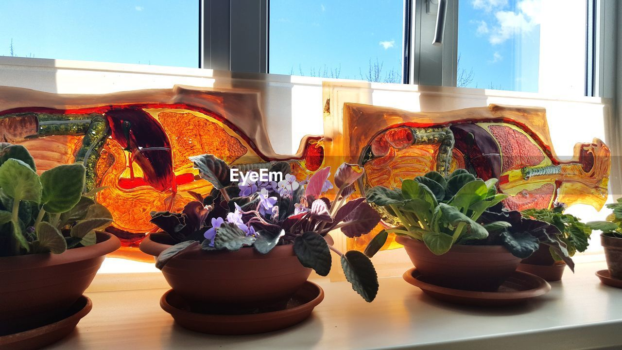 plant, window, flowering plant, flower, nature, no people, table, indoors, potted plant, glass - material, vase, decoration, transparent, beauty in nature, close-up, growth, day, window sill, freshness, houseplant, flower pot, glass, flower head