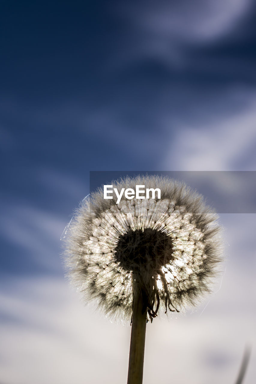 nature, dandelion, growth, beauty in nature, fragility, stem, focus on foreground, flower, outdoors, close-up, softness, plant, day, freshness, no people, flower head, sky