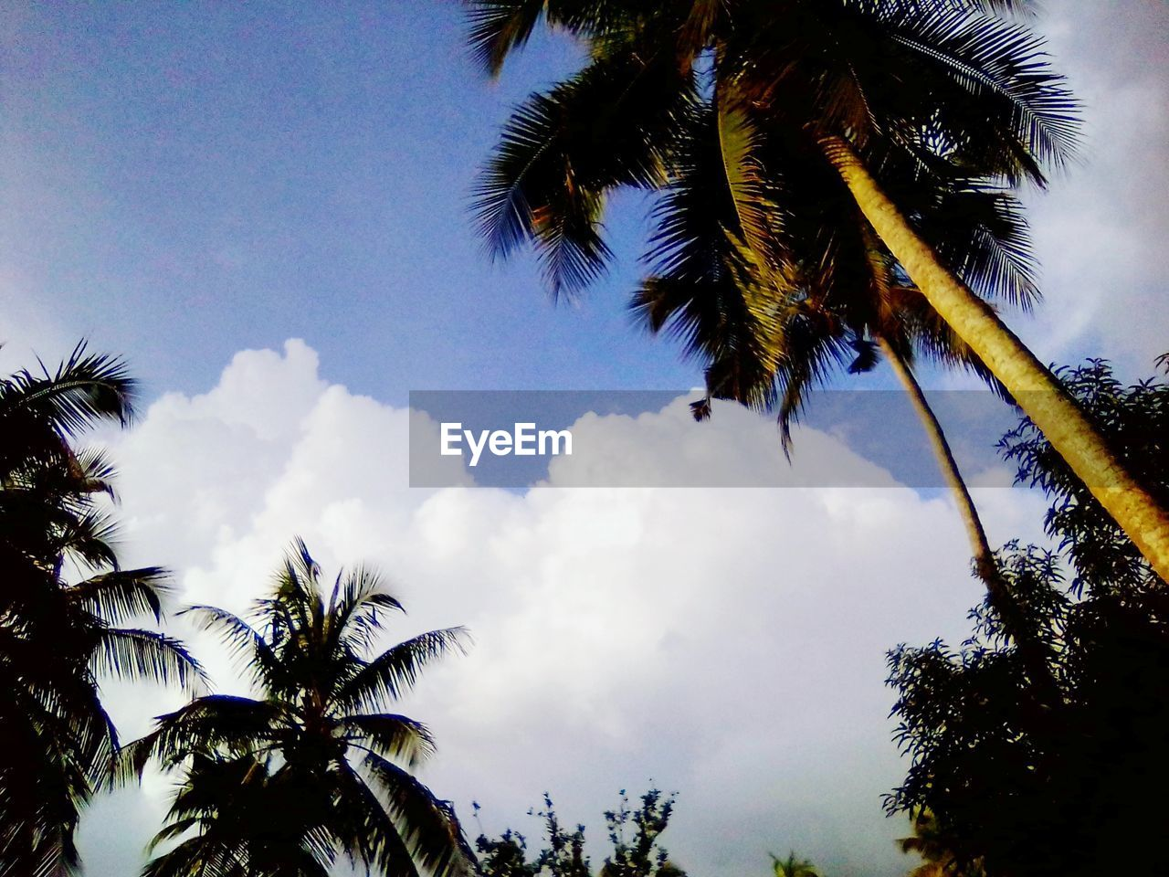 tree, sky, palm tree, plant, tropical climate, cloud - sky, low angle view, beauty in nature, growth, tranquility, nature, no people, tranquil scene, scenics - nature, day, silhouette, outdoors, coconut palm tree, leaf, tree trunk, palm leaf, tropical tree