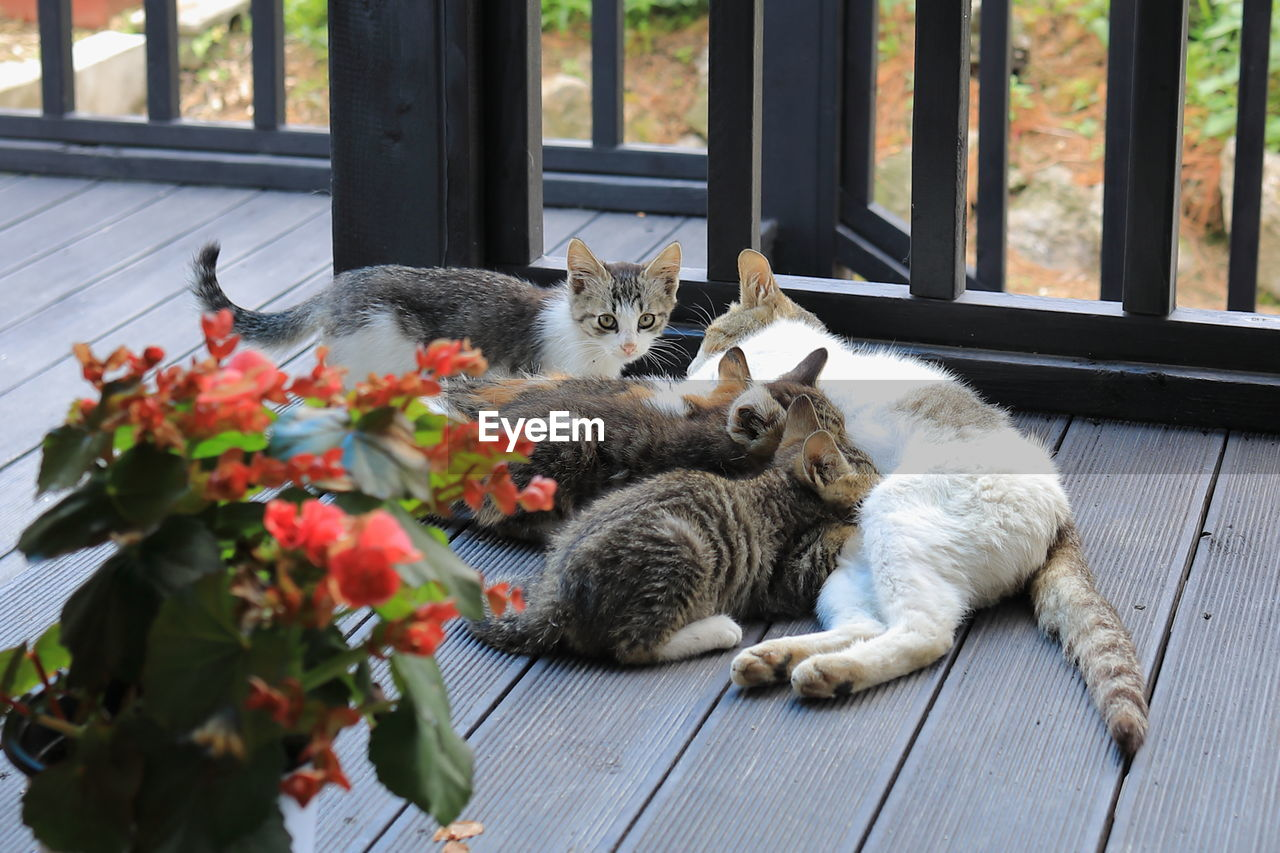 mammal, domestic, domestic cat, pets, cat, domestic animals, feline, animal themes, animal, vertebrate, one animal, relaxation, no people, plant, day, flowering plant, flower, indoors, resting, nature, whisker