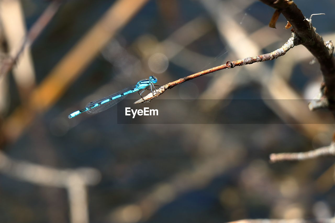 focus on foreground, one animal, outdoors, no people, day, damselfly, animals in the wild, close-up, animal themes, animal wildlife, water, nature