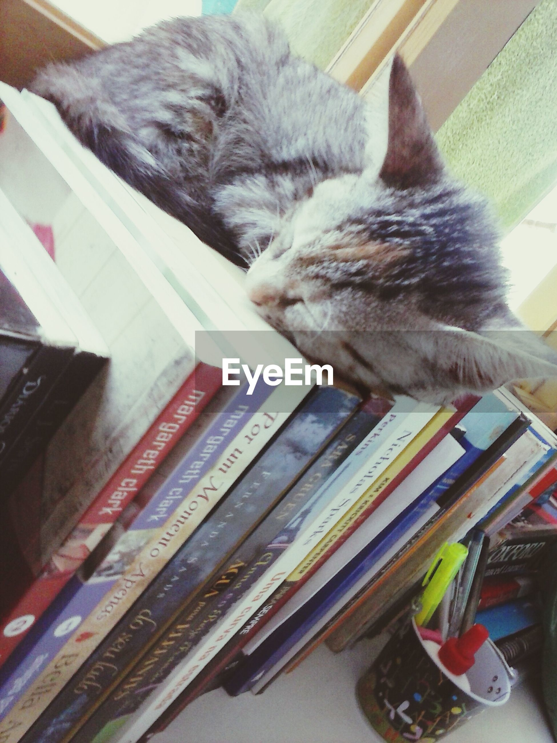 domestic cat, pets, indoors, cat, domestic animals, one animal, animal themes, feline, mammal, relaxation, whisker, high angle view, home interior, resting, no people, close-up, home, book, sleeping, lying down