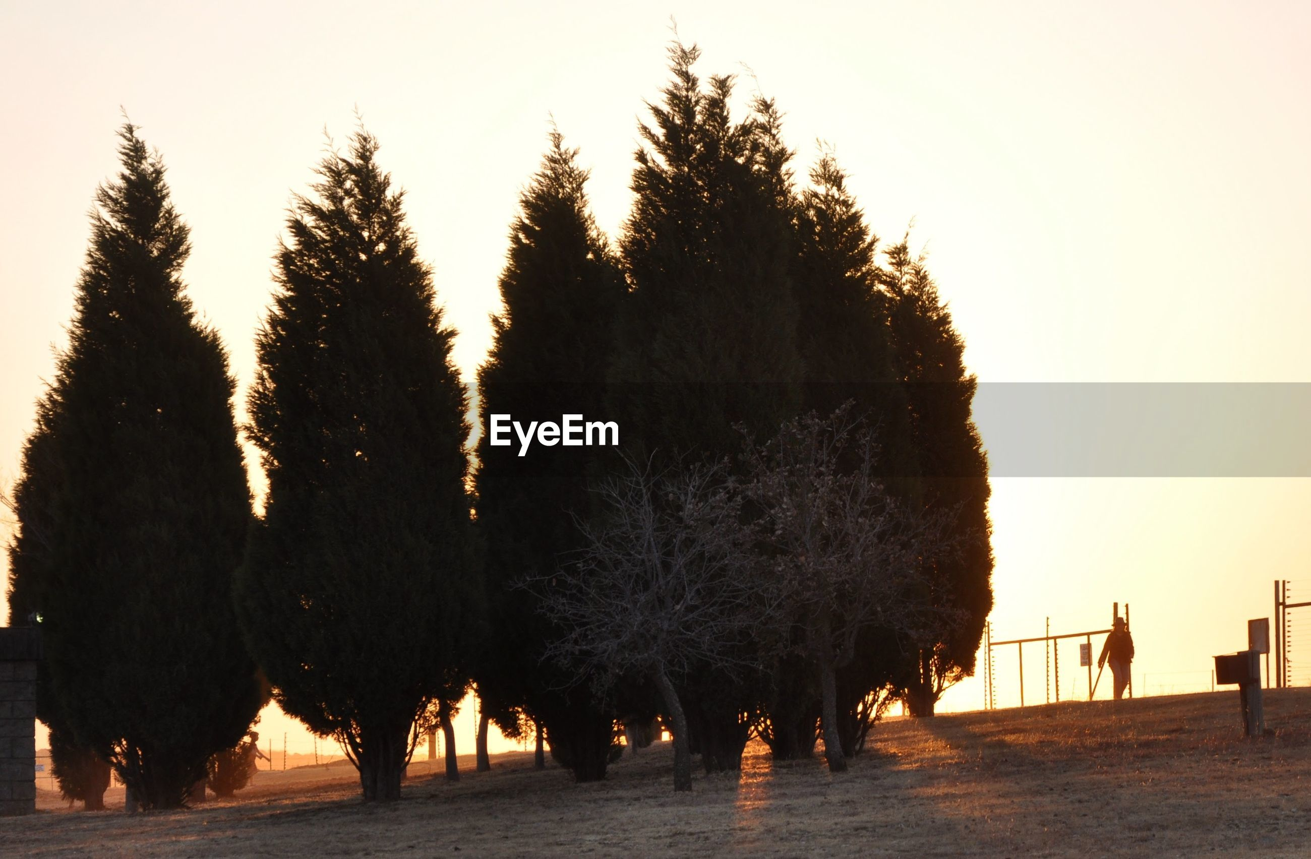 PANORAMIC VIEW OF TREES AGAINST SKY