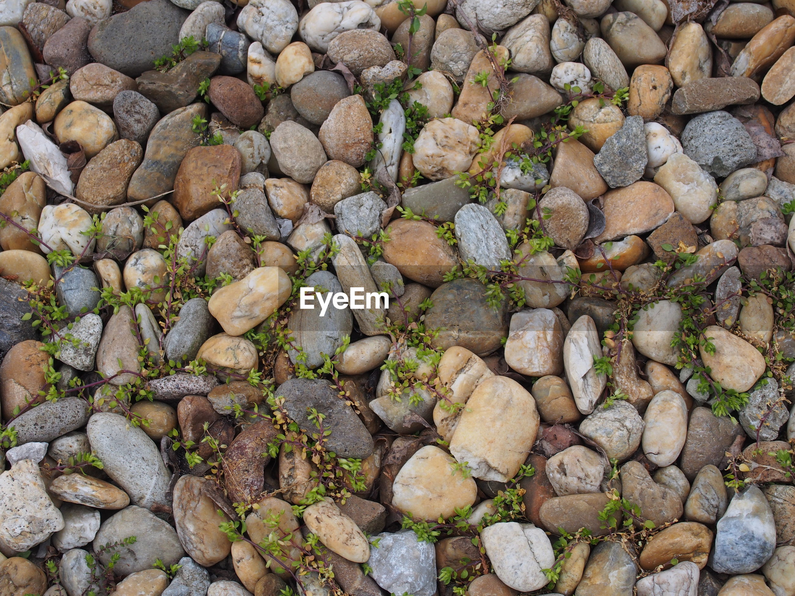 Full frame view of pebbles