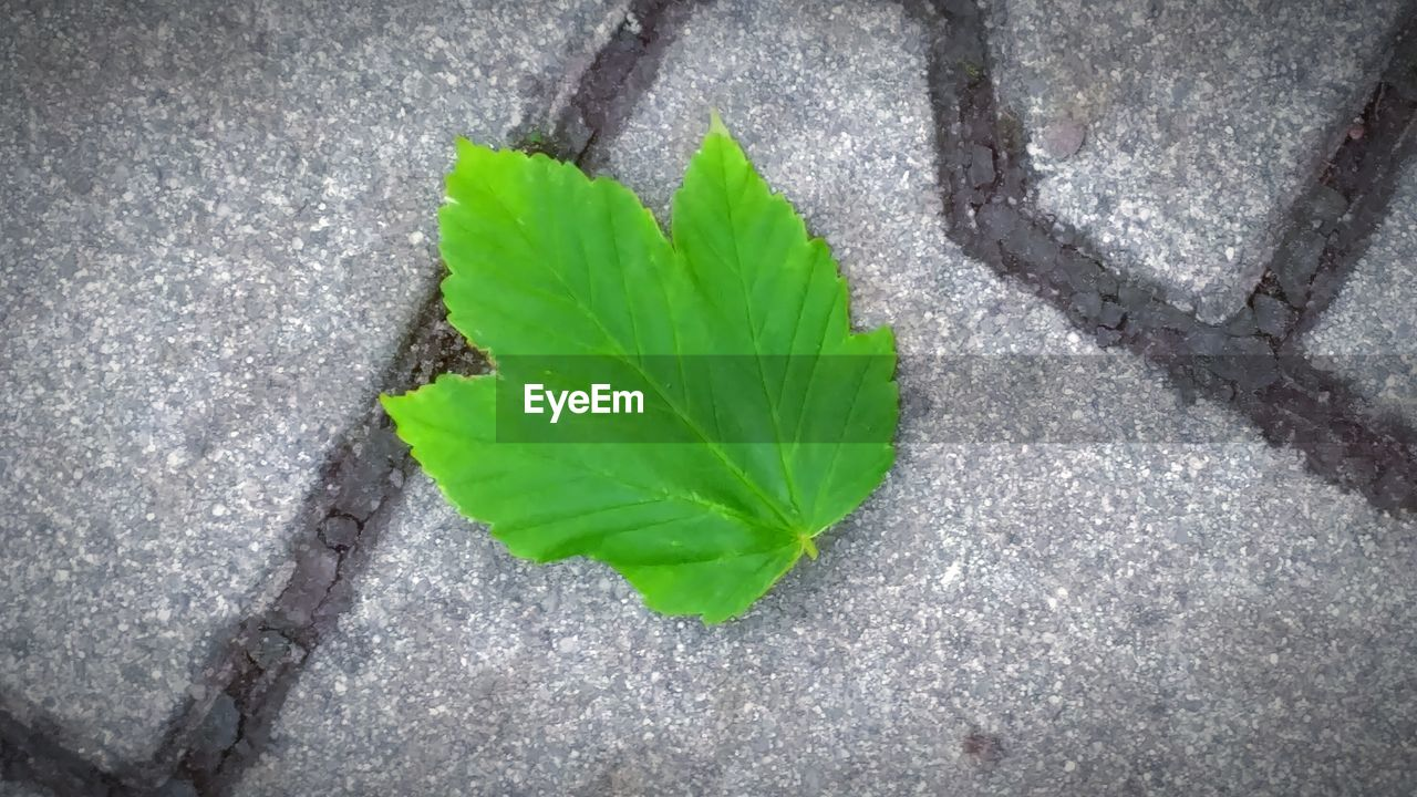 leaf, green color, high angle view, close-up, day, freshness, no people, outdoors, fragility, healthy eating, nature, food