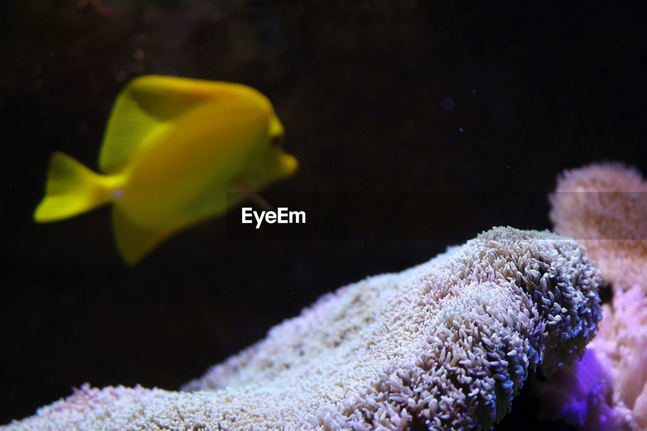 Side view of a fish underwater
