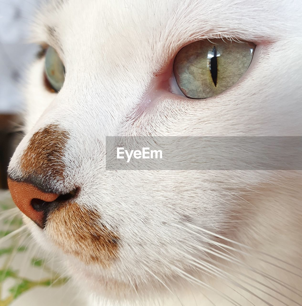 domestic, pets, domestic animals, animal, one animal, animal themes, mammal, feline, domestic cat, cat, close-up, vertebrate, animal body part, animal head, animal eye, whisker, eye, no people, looking, focus on foreground, animal nose, snout, animal mouth