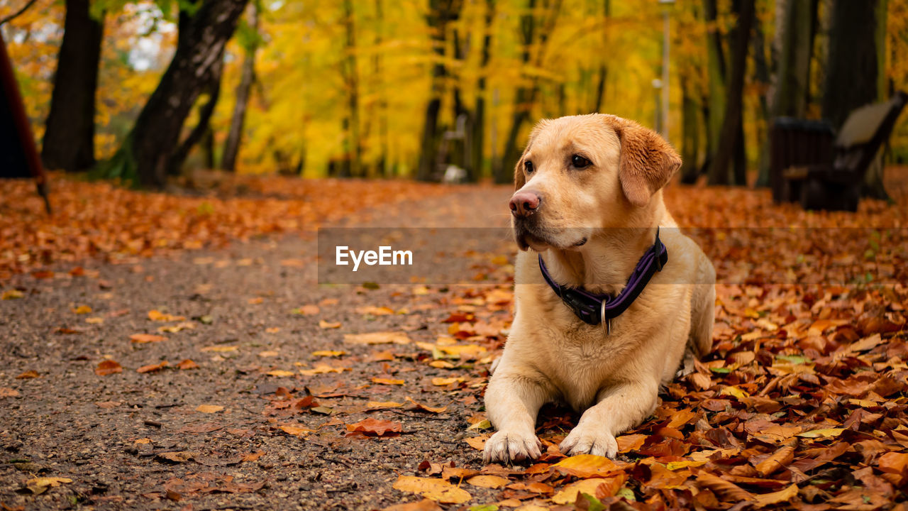 canine, dog, one animal, pets, domestic, mammal, animal themes, autumn, domestic animals, plant part, leaf, animal, change, collar, pet collar, land, nature, sitting, vertebrate, day, no people, outdoors, leaves, animal head