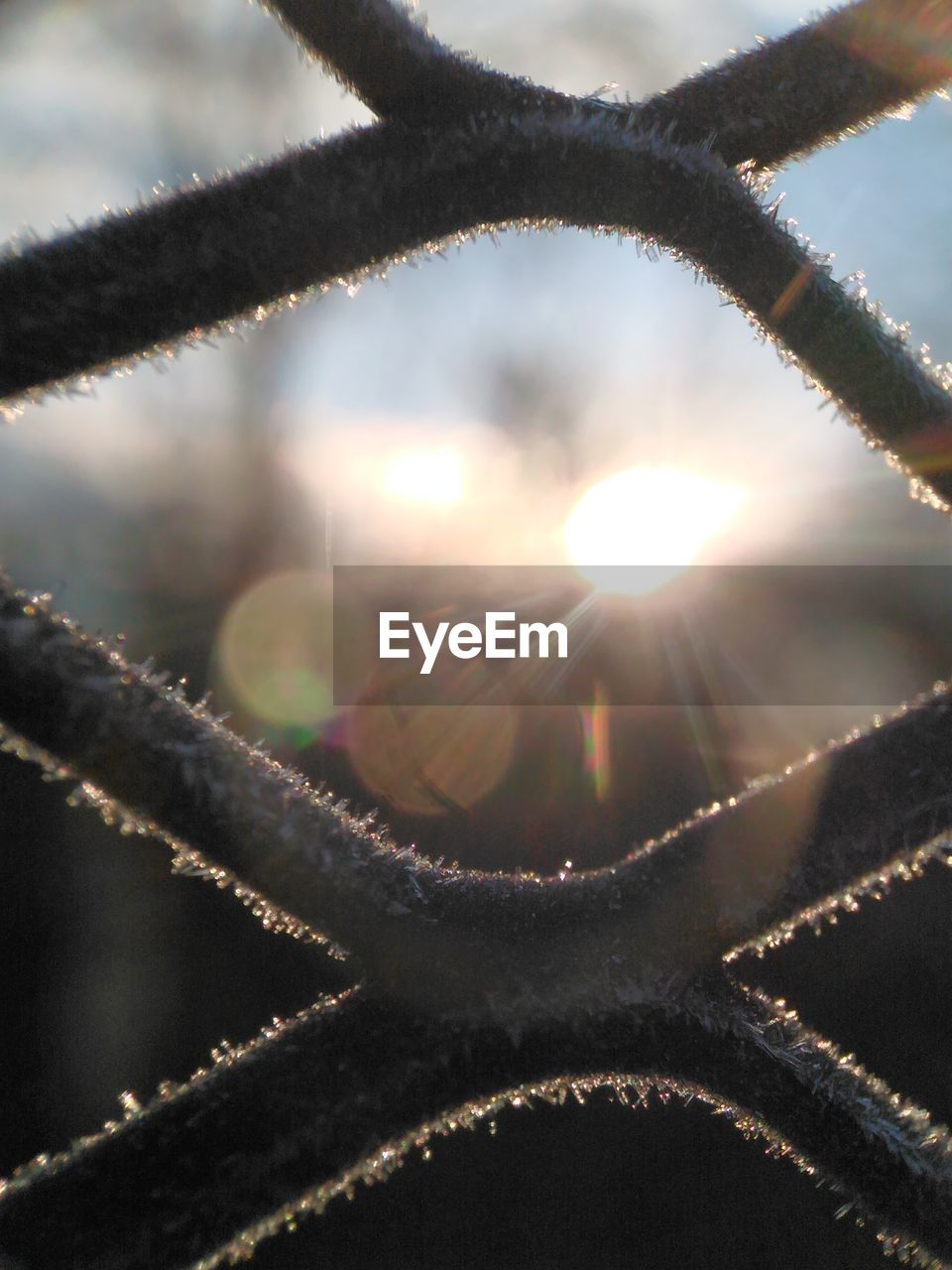 lens flare, sunlight, sun, close-up, plant, no people, nature, focus on foreground, day, beauty in nature, selective focus, sky, sunbeam, outdoors, growth, cold temperature, frozen, tranquility, snow, bright, solar flare
