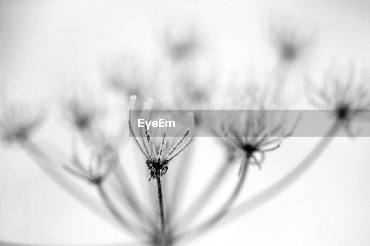 flower, insect, flower head, fragility, one animal, nature, plant, petal, close-up, no people, beauty in nature, animals in the wild, day, animal themes, growth, outdoors, freshness, pollination