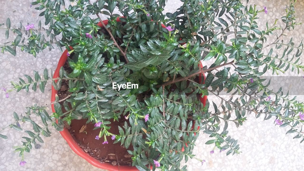 plant, growth, green color, potted plant, leaf, nature, no people, day, outdoors, close-up
