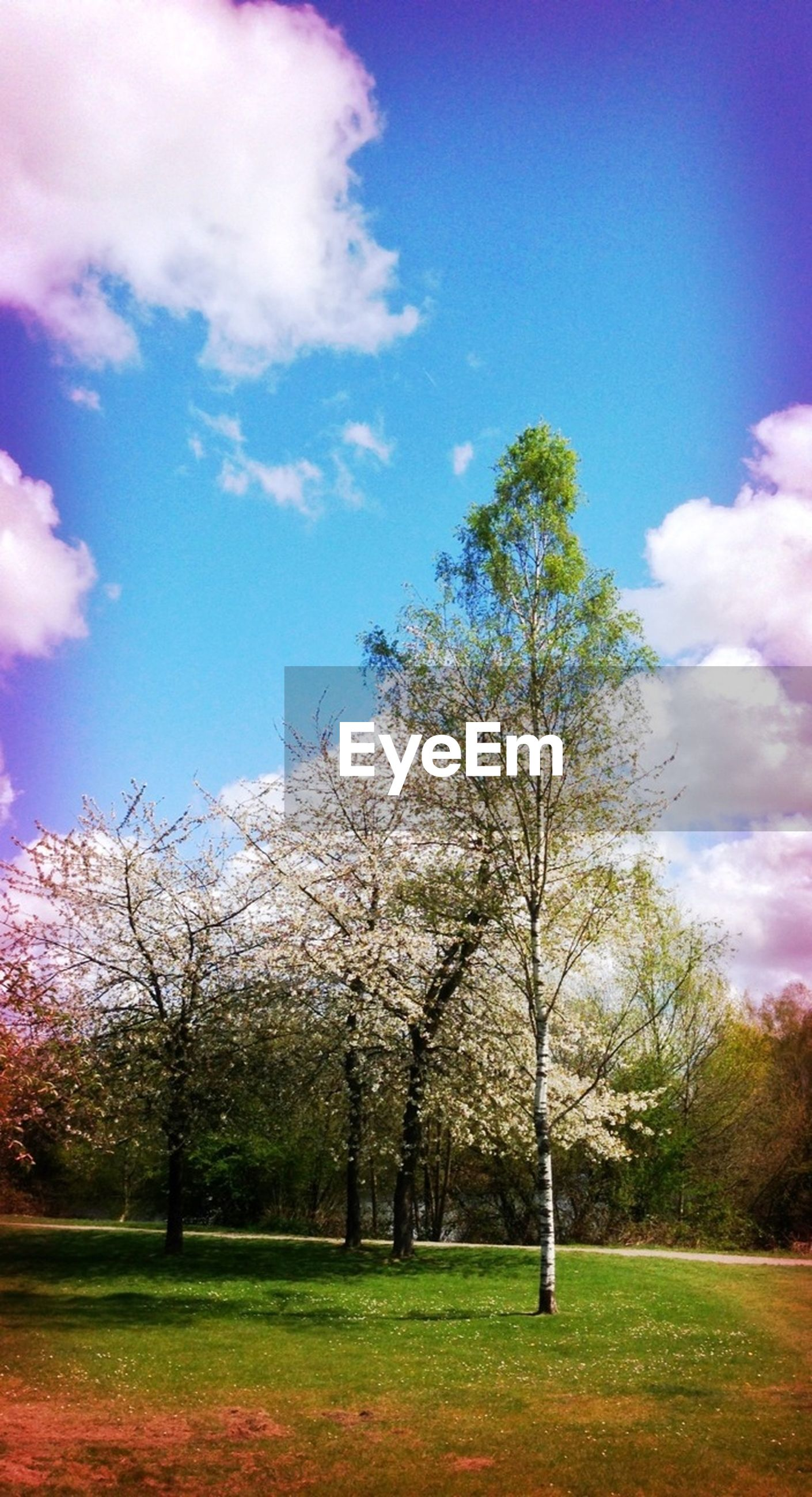 Trees growing on grassy field against sky