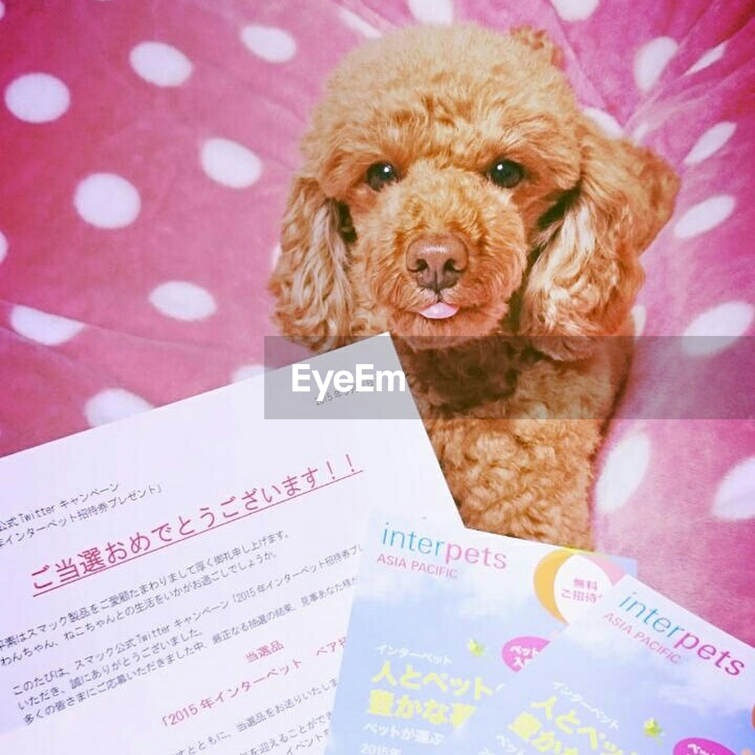 indoors, text, close-up, western script, high angle view, no people, pets, paper, dog, brown, still life, freshness, animal themes, pink color, domestic animals, book, communication, selective focus, stuffed toy, relaxation
