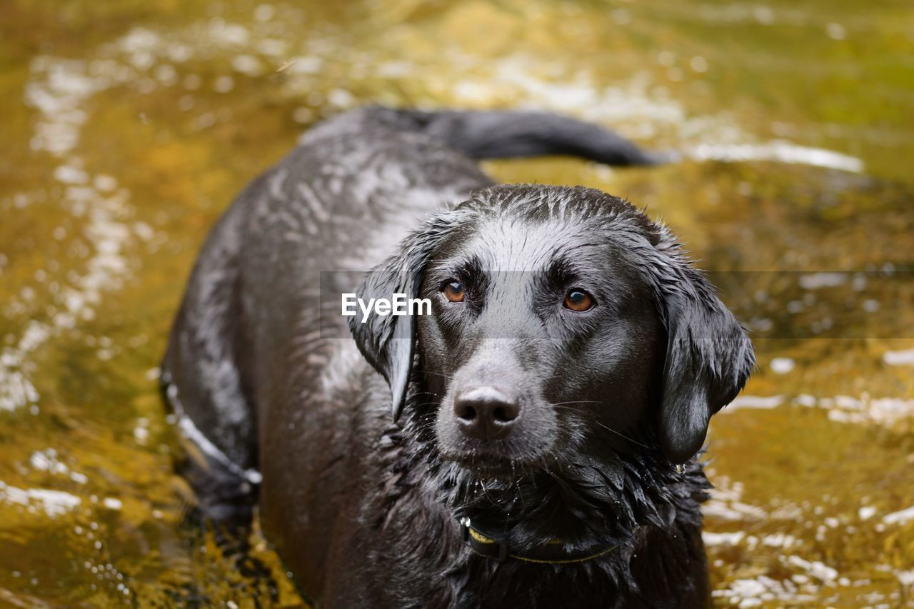 View Of Wet Dog In Water