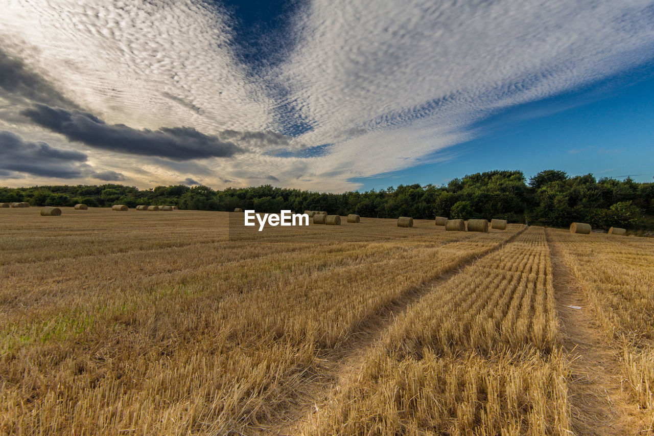 field, agriculture, landscape, tranquil scene, tranquility, rural scene, nature, scenics, no people, beauty in nature, sky, day, tree, outdoors, cloud - sky, hay bale