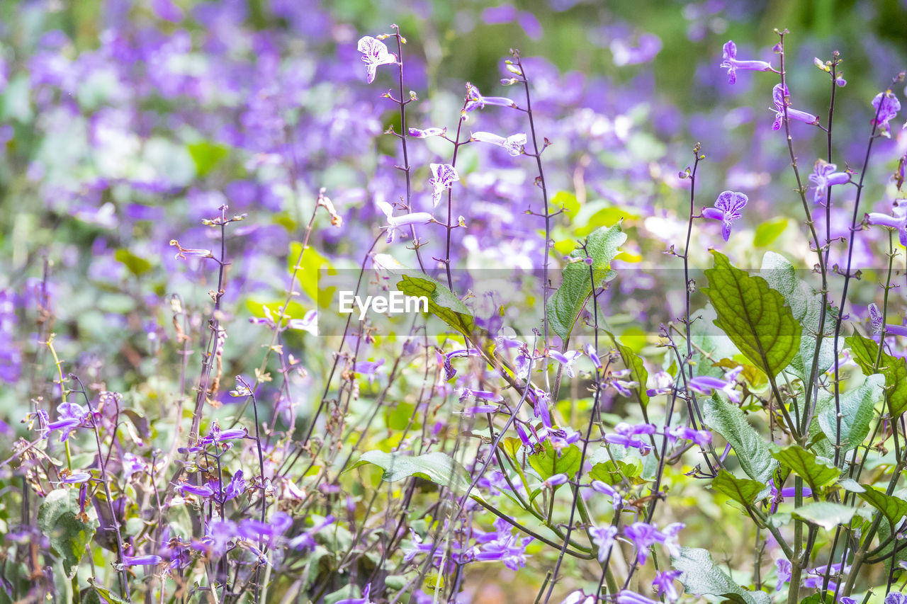 flower, purple, nature, growth, beauty in nature, plant, fragility, no people, outdoors, field, day, freshness, petal, blooming, close-up, flower head
