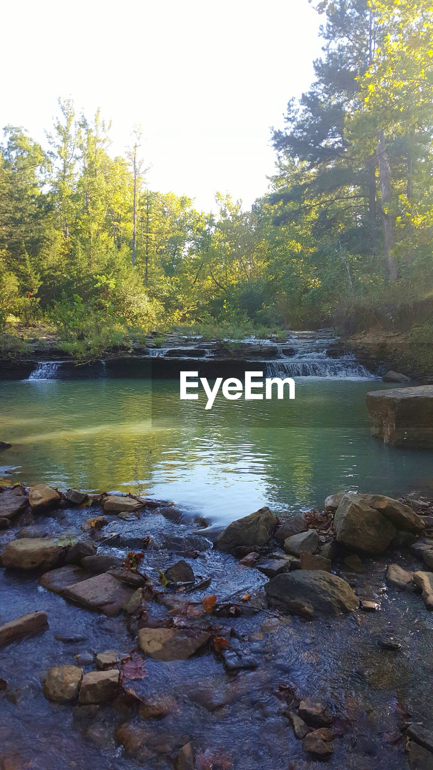 water, tree, tranquility, tranquil scene, scenics, lake, beauty in nature, nature, reflection, river, forest, rock - object, clear sky, growth, day, non-urban scene, idyllic, stream, outdoors, waterfront