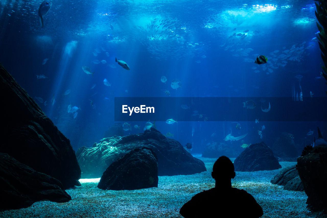 Rear View Of Silhouette Man Standing Against Fish In Aquarium