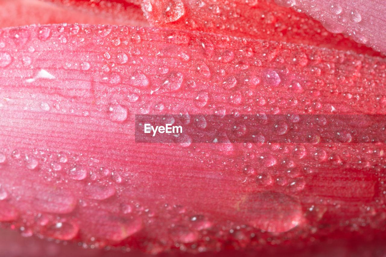 Full frame shot of wet pink petal