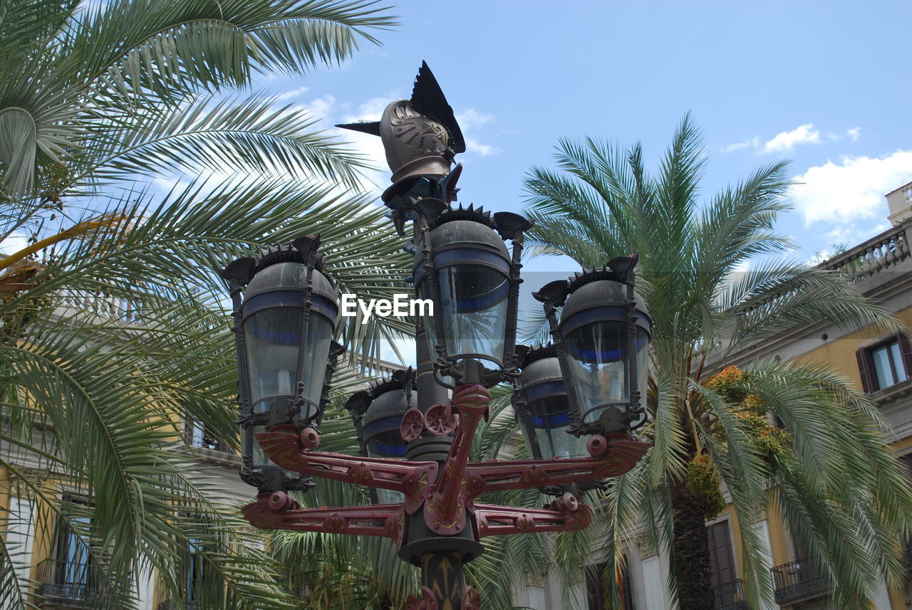 palm tree, low angle view, tree, architecture, no people, built structure, building exterior, statue, sculpture, outdoors, day, sky, growth