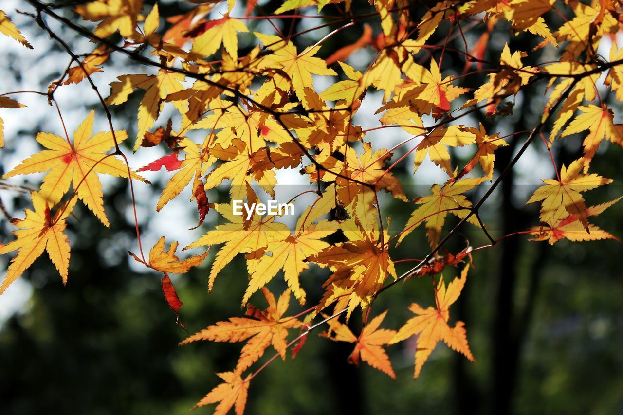 Close-Up Of Autumn Leaves Growing Outdoors