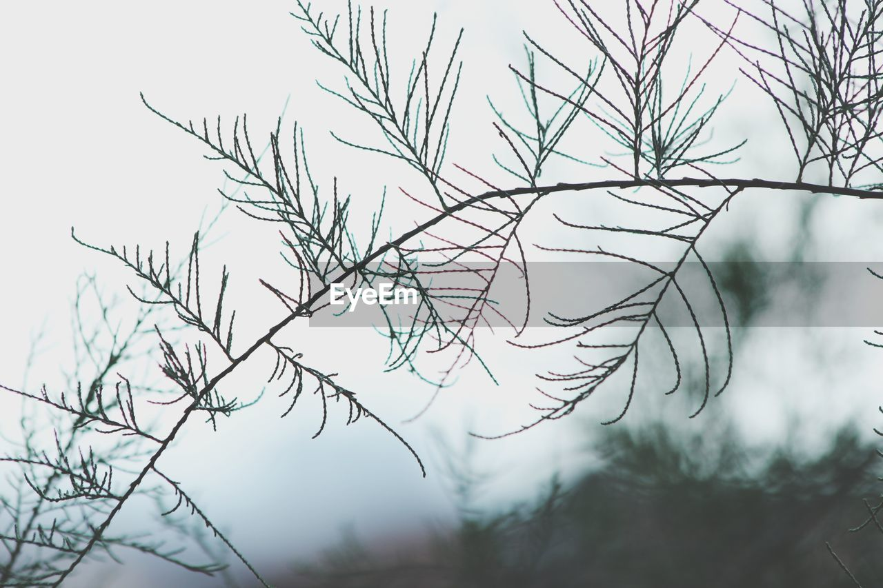 no people, nature, day, outdoors, tree, close-up, beauty in nature, branch, sky