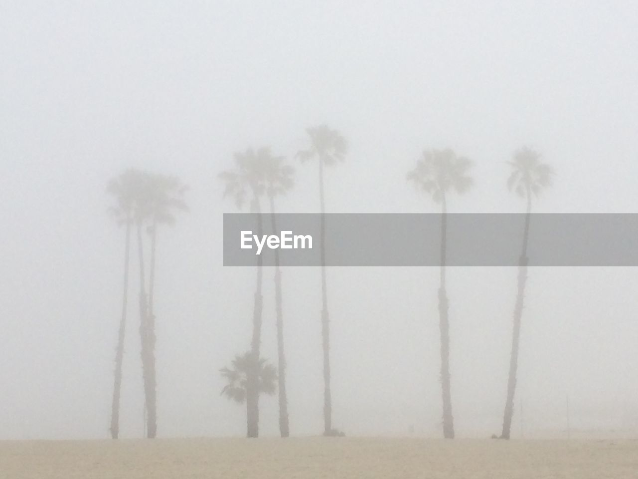 fog, tree, plant, land, no people, tranquility, nature, sky, tranquil scene, environment, beauty in nature, field, tree trunk, landscape, trunk, day, tropical climate, growth, outdoors, hazy