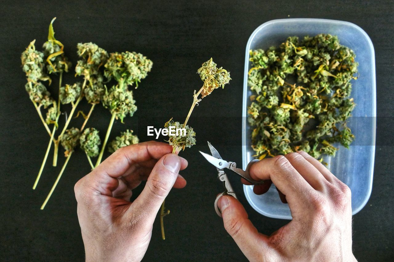 Close-Up Of Hand Cutting Cannabis Buds