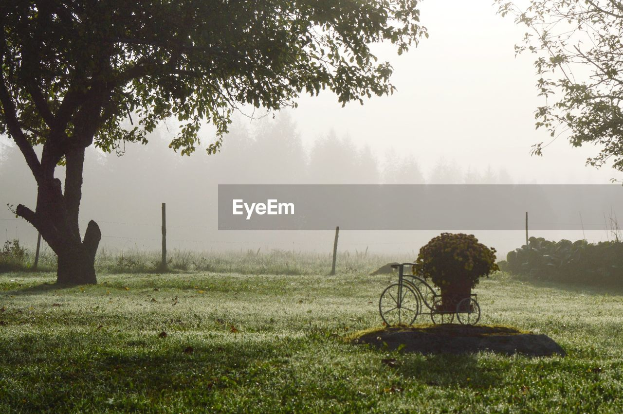plant, tree, fog, field, land, grass, nature, beauty in nature, tranquility, tranquil scene, landscape, day, environment, growth, no people, scenics - nature, sky, outdoors, green color, wheel