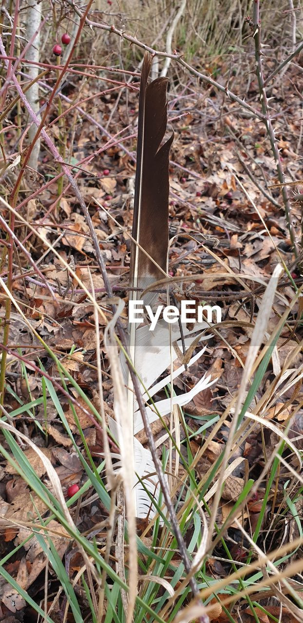 land, field, plant, day, nature, close-up, no people, grass, dry, high angle view, metal, outdoors, twig, selective focus, growth, leaf, plant part, focus on foreground, animal themes, single object, blade of grass