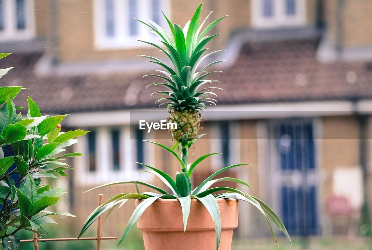 plant, growth, leaf, plant part, focus on foreground, green color, architecture, building exterior, built structure, day, nature, building, no people, outdoors, close-up, house, potted plant, front or back yard, freshness, window, houseplant