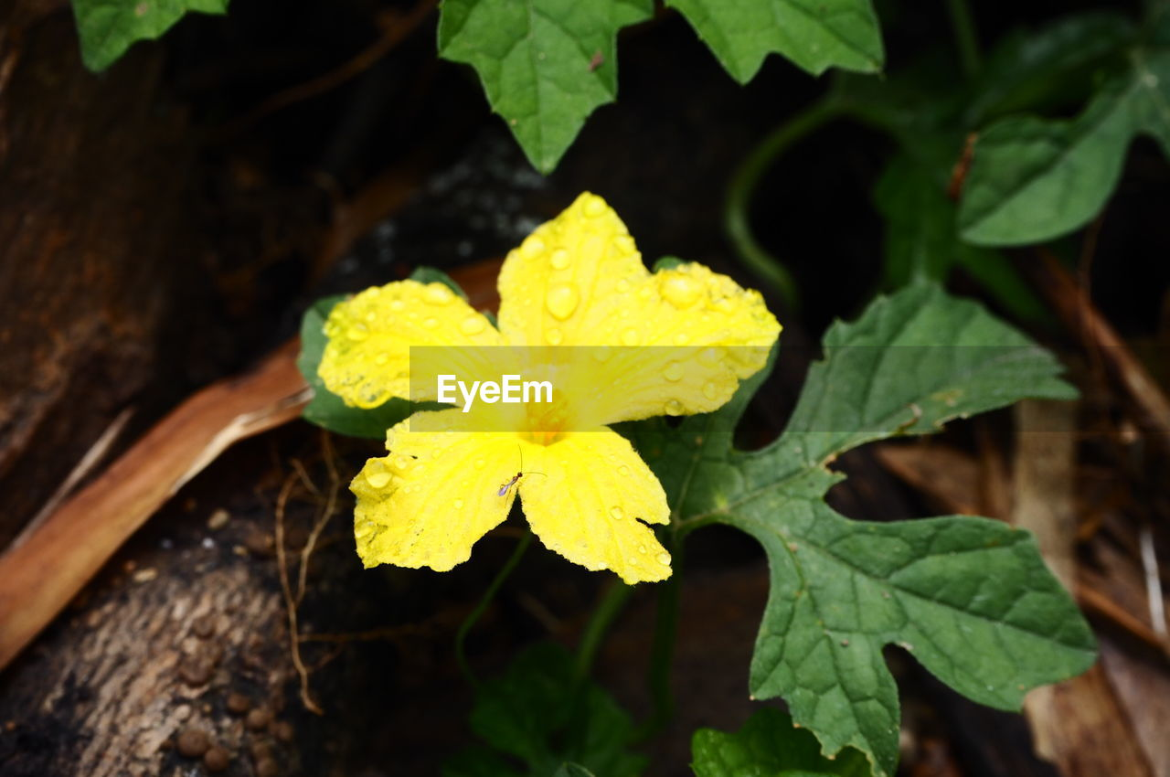 plant, leaf, plant part, beauty in nature, growth, yellow, close-up, flower, vulnerability, flowering plant, fragility, nature, freshness, no people, inflorescence, day, green color, flower head, petal, selective focus, outdoors