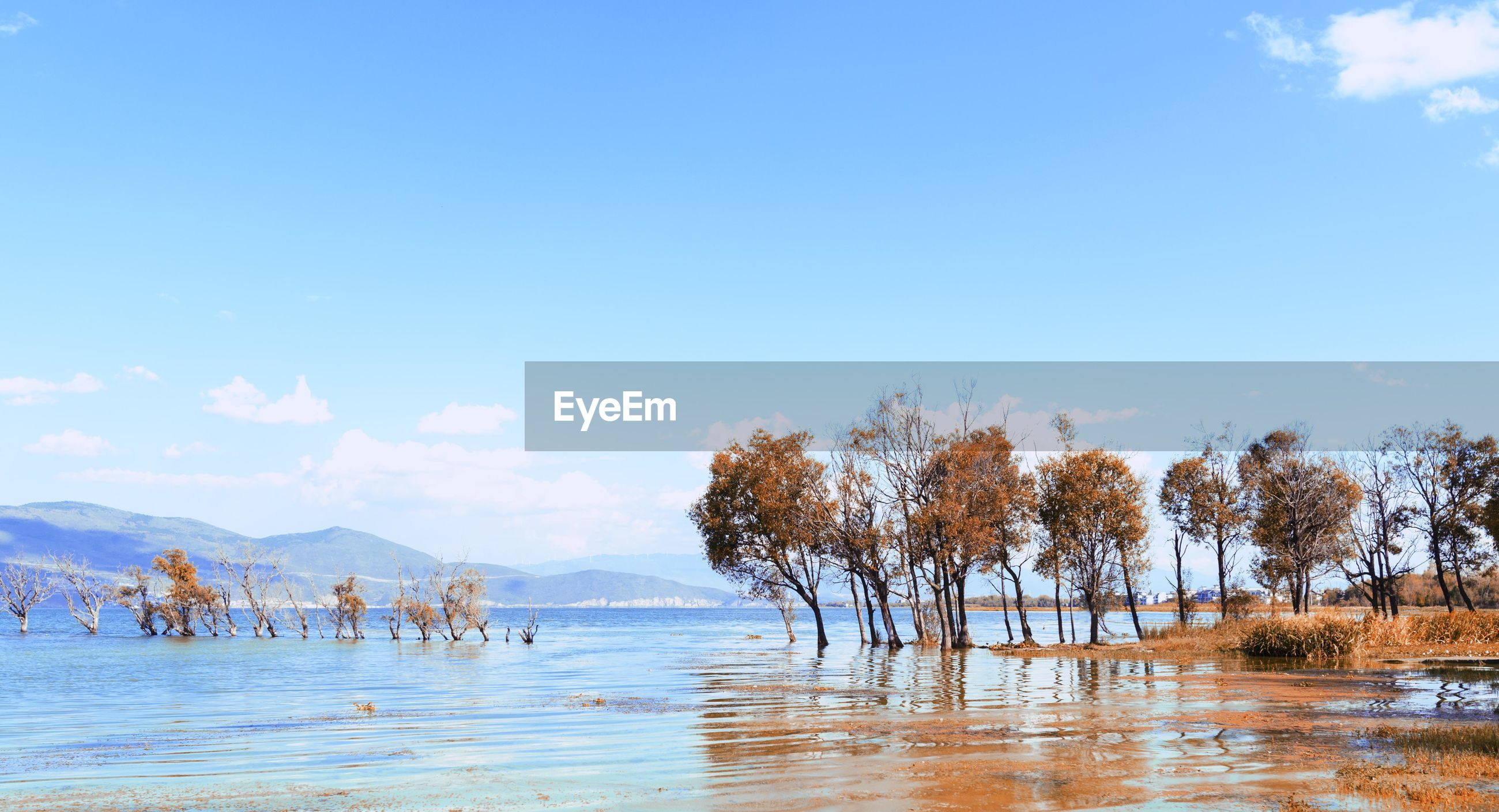 Trees in water against clear sky