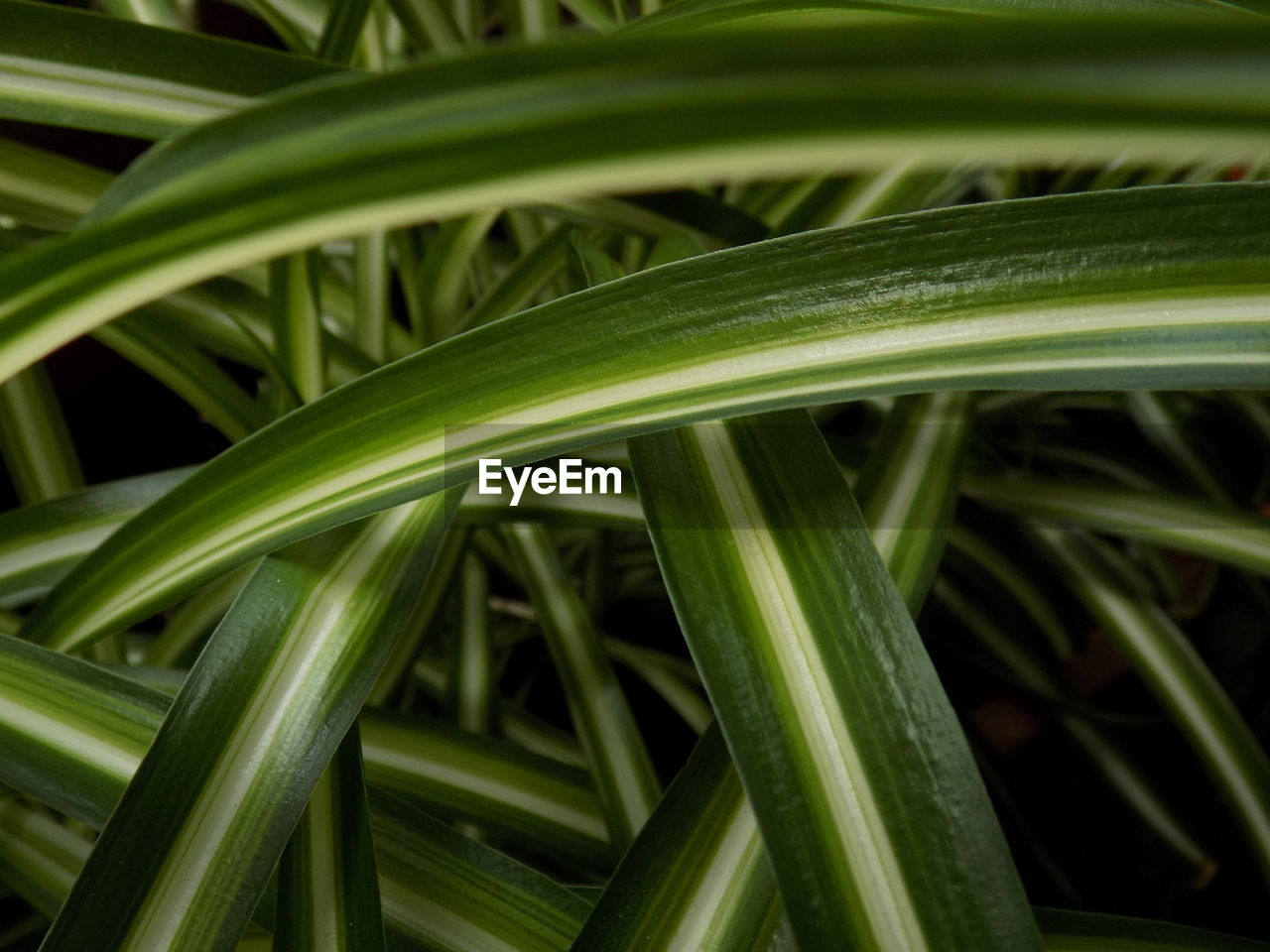 green color, leaf, plant part, growth, no people, plant, close-up, nature, freshness, day, beauty in nature, focus on foreground, outdoors, food, food and drink, vegetable, selective focus, blade of grass, grass, high angle view, palm leaf