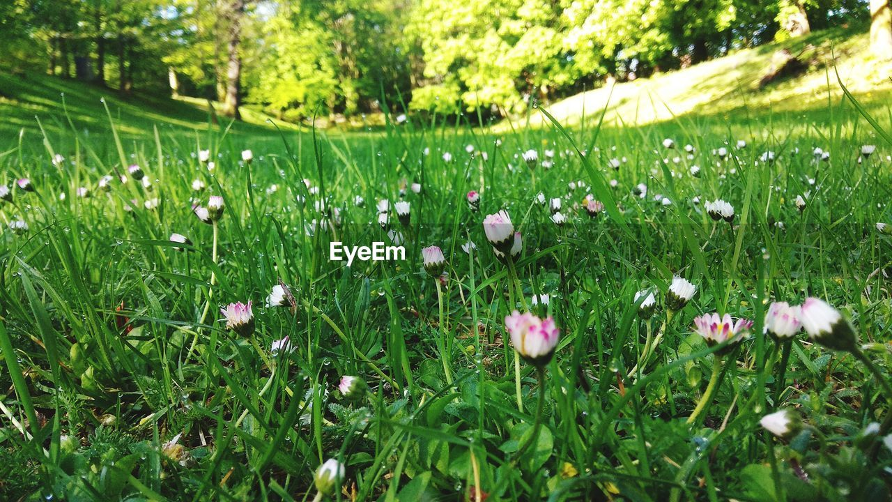 plant, growth, beauty in nature, flowering plant, flower, green color, freshness, fragility, land, vulnerability, field, grass, no people, day, nature, close-up, selective focus, tranquility, petal, outdoors, flower head, springtime