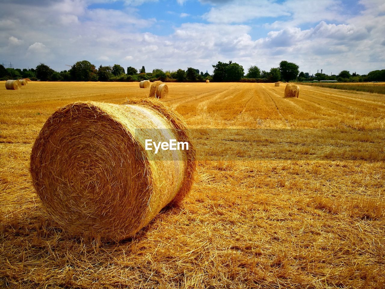 hay, field, agriculture, bale, land, landscape, plant, farm, sky, environment, rural scene, cloud - sky, scenics - nature, tranquil scene, rolled up, harvesting, nature, tranquility, beauty in nature, tree, no people, outdoors