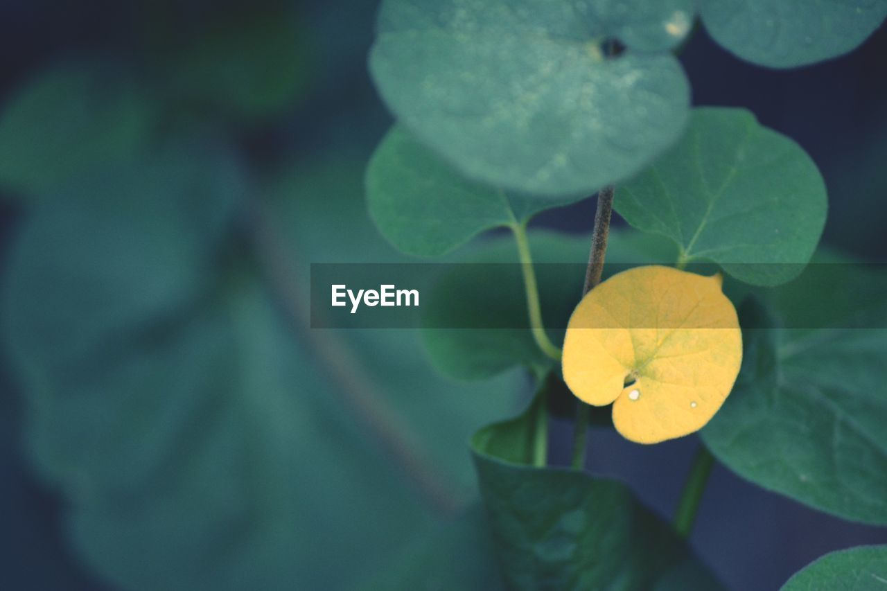 plant part, leaf, plant, growth, beauty in nature, green color, close-up, yellow, freshness, nature, no people, flower, selective focus, day, outdoors, focus on foreground, flowering plant, vulnerability, fragility, water, flower head, leaves