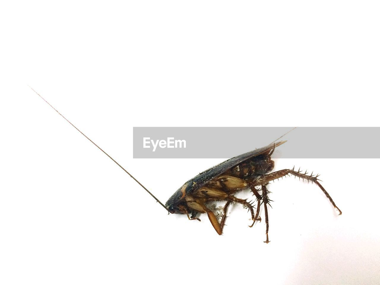 High angle view of insect over white background