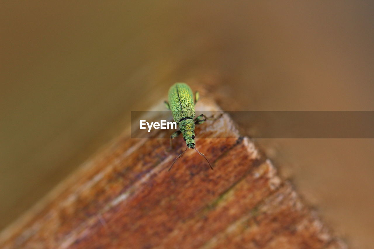 animal wildlife, animals in the wild, one animal, close-up, selective focus, animal themes, animal, invertebrate, insect, green color, no people, day, wood - material, nature, outdoors, zoology, leaf, plant part, animal body part, high angle view