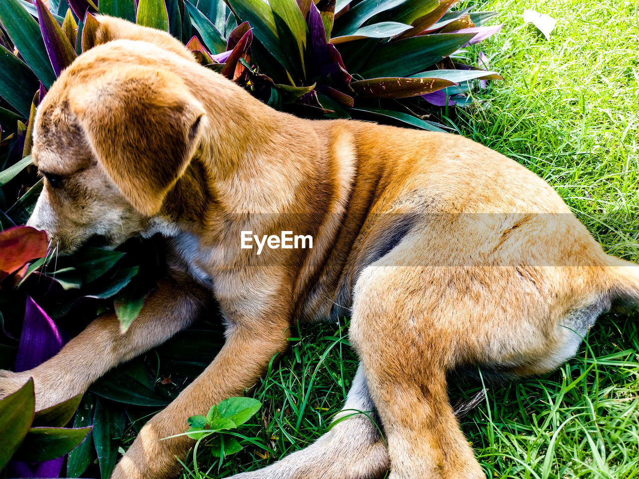 animal themes, one animal, domestic animals, pets, grass, mammal, day, no people, relaxation, dog, outdoors, close-up, nature