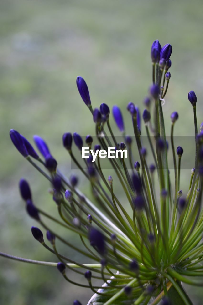 nature, flower, growth, no people, plant, close-up, beauty in nature, day, outdoors, fragility, flower head, freshness, crocus