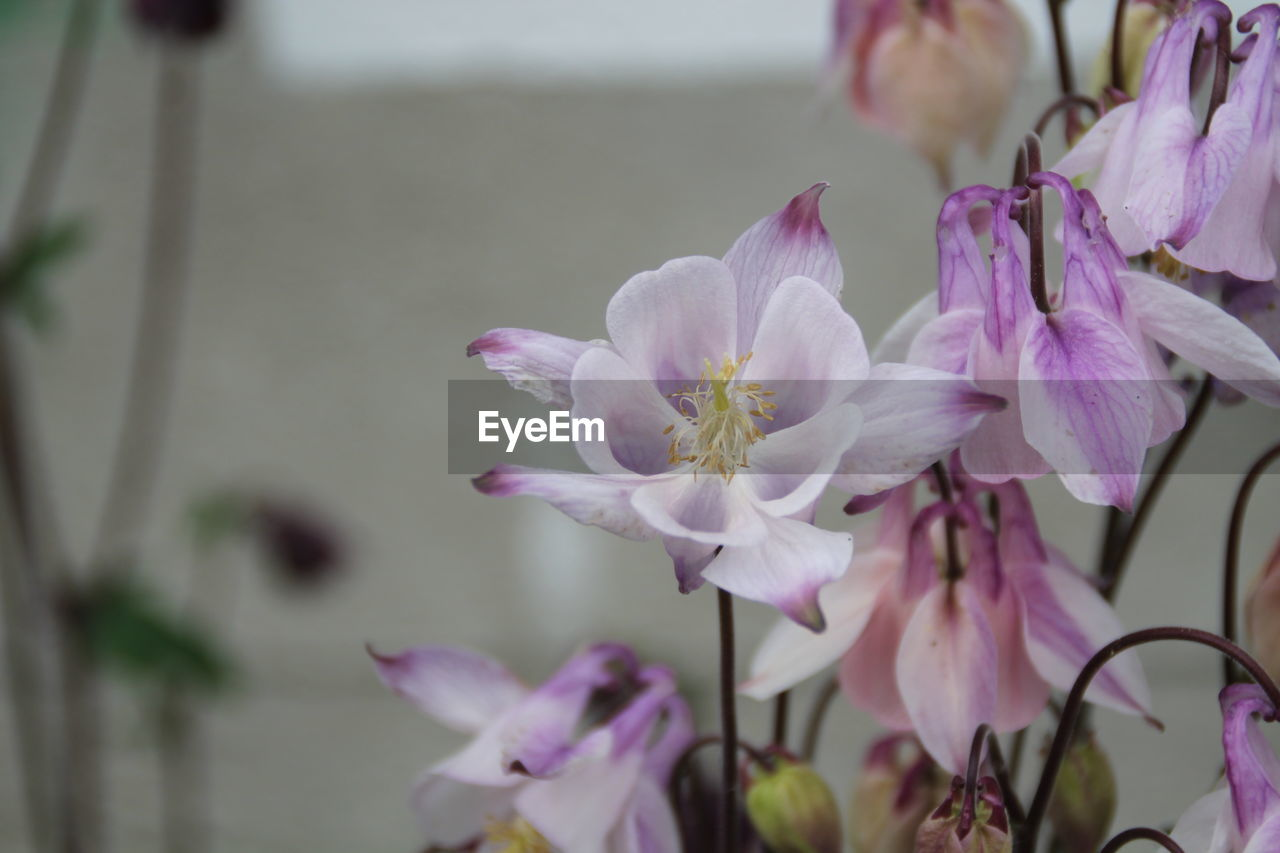 flower, fragility, petal, growth, nature, pink color, no people, close-up, beauty in nature, freshness, focus on foreground, plant, flower head, day, outdoors