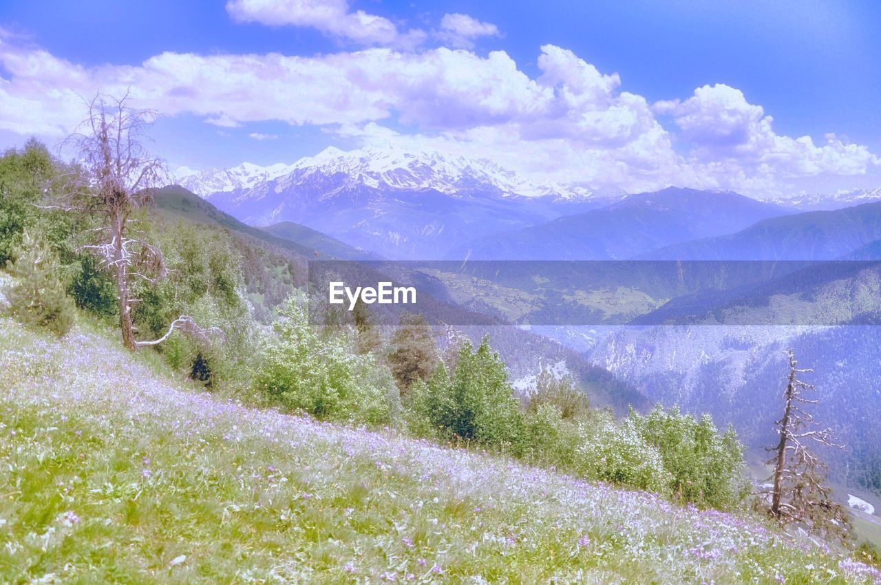 mountain, beauty in nature, scenics - nature, tranquil scene, plant, environment, tranquility, mountain range, cloud - sky, nature, sky, landscape, no people, tree, day, cold temperature, non-urban scene, winter, snow, outdoors, snowcapped mountain