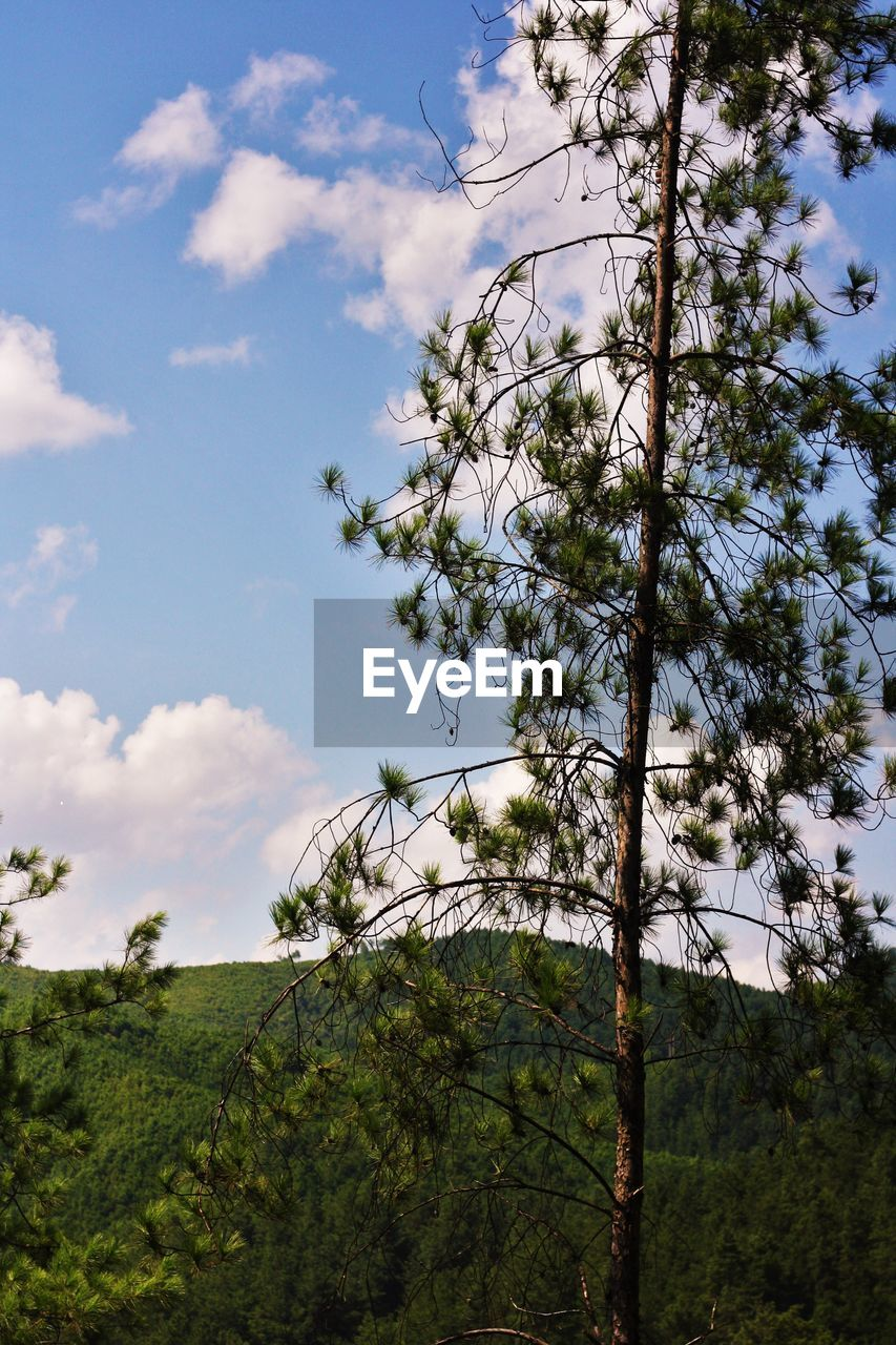tree, nature, growth, sky, no people, day, low angle view, beauty in nature, plant, tranquility, outdoors, branch, scenics, forest, landscape